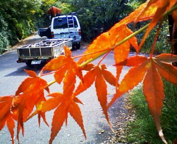 紅葉の季節へ~